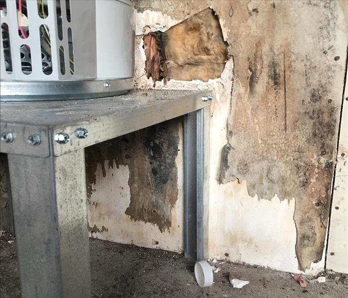 Long-term Mold Damage