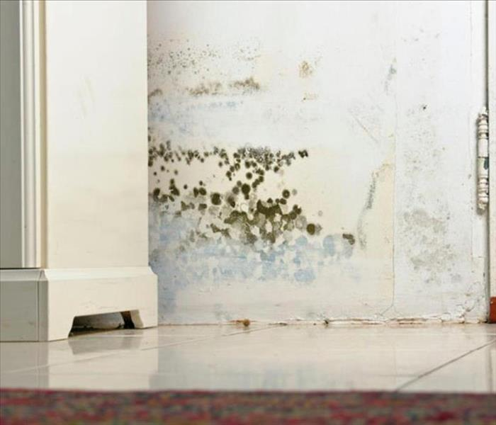 Mold Remediation Does your Crescenta Valley / East Glendale home have a mold problem?