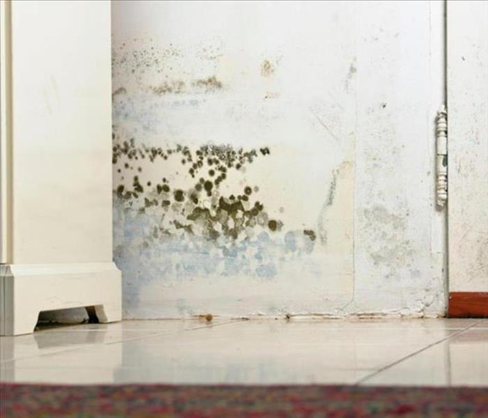Commercial Mold In Your Business